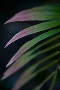Santana do Riacho_MG, Brasil...Detalhe de uma planta do Alto Palacio no Parque Nacional da Serra do Cipo...Detail of a plant in Alto Palacio in the Serra do Cipo National Park...Foto: JOAO MARCOS ROSA / NITRO
