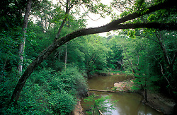 Stock photo of a river running through a forested area