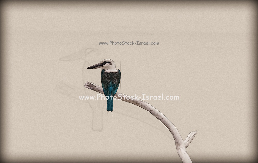 Digitally enhanced image of a Kingfisher perched on a branch as seen from behind