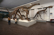 Yangchuanosaurs is the big therapod carnivore on right.  Omeisaurus Fuxinsis is the sauropod (brontosaur) in the foreground.