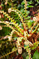 Ferns in West Sussex woodland
