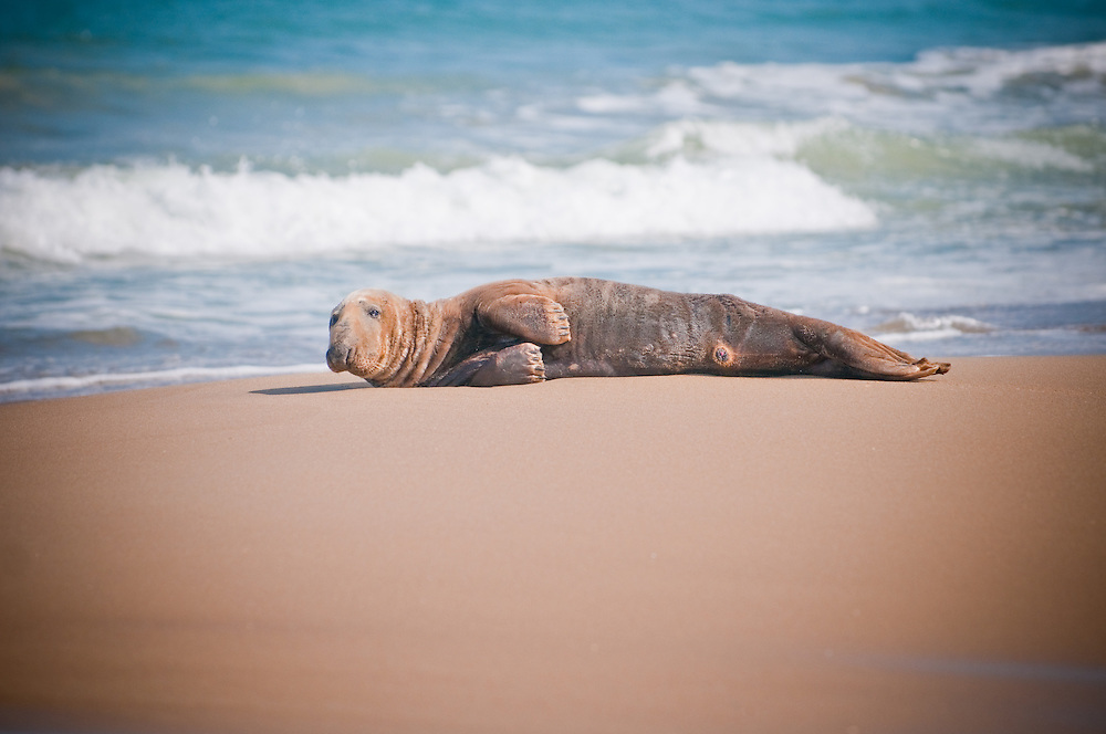 Outer Banks Seal