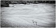 05-11-2017  Foto's genomen tijdens een persreis naar Buffalo City, een gemeente binnen de Zuid-Afrikaanse provincie Oost-Kaap. East London Golf Club - Impala op de baan