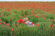 Young boy picks red poppies in a field of poppies by Kristina Cilia Photography of Vacaville