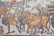 Bulls pulling a wagon from the Ambulatory of The Great Hunt, room no 28,  at the Villa Romana del Casale which containis the richest, largest and most complex collection of Roman mosaics in the world. Constructed in the first quarter of the 4th century AD. Sicily, Italy. A UNESCO World Heritage Site. .<br /> <br /> If you prefer to buy from our ALAMY PHOTO LIBRARY  Collection visit : https://www.alamy.com/portfolio/paul-williams-funkystock/villaromanadelcasale.html<br /> Visit our ROMAN MOSAIC PHOTO COLLECTIONS for more photos to buy as buy as wall art prints https://funkystock.photoshelter.com/gallery/Roman-Mosaics-Roman-Mosaic-Pictures-Photos-and-Images-Fotos/G00008dLtP71H_yc/C0000q_tZnliJD08