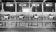 "Ackroyd 00037-56. ""International Totalizer Machine. Multnomah Stadium. Cashiers machines. August 15, 1946."" on-track betting machines for races at Multnomah Stadium. betting cashiers and ticket printing machines. International Totalizer Company, San Mateo, California."