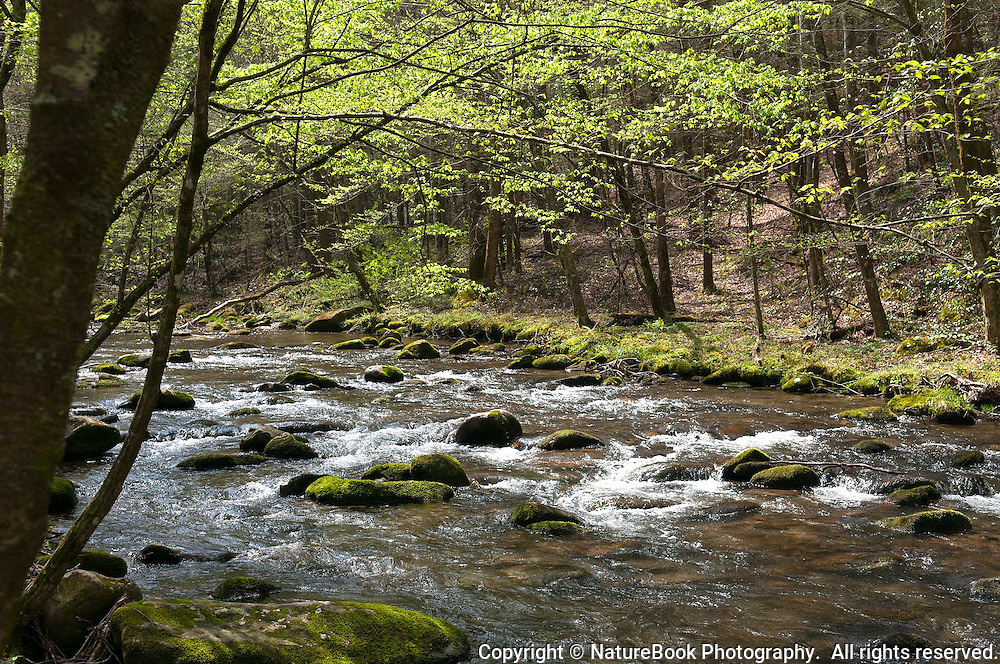 Early spring in the Great Smoky Mountains sees young leaves on the trees, wildlife beginning to stir, and streams rushing with water from the snowmelt.