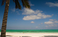 A palm tree over the beach at Paje, Zanzibar, Tanzania
