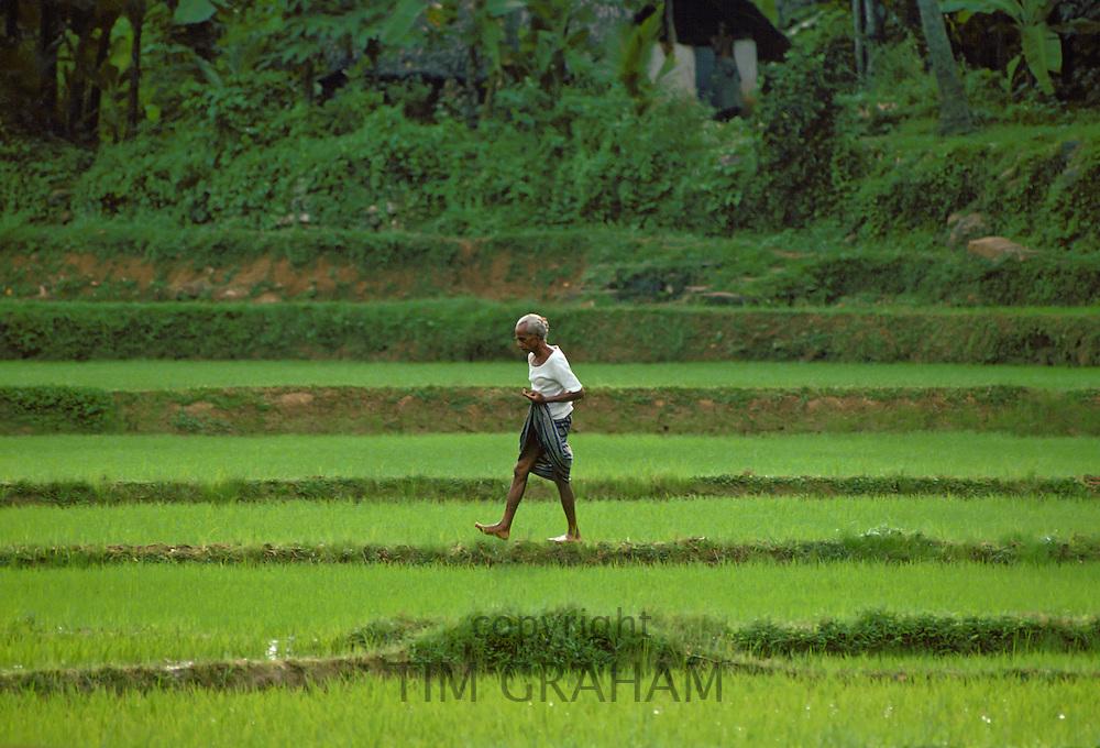 An elderly  man, walking through a field, in Sri Lanka.