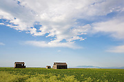 Old Barn near Lewistown Montana