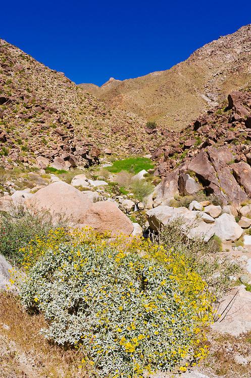 Borrego Palm Canyon, Anza-Borrego Desert State Park, California USA