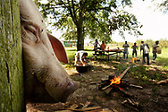 A slaughtered pig head hangs from a wooden beam as another pig is butchered in preparation for a celebratory dinner. The pigs were cut into pieces and then boiled in a large pot over a camp fire.