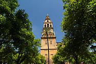 Cordoba. La Mezquita de Cordoba, actual Catedral. Patio de los Naranjos