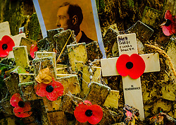 Remembrance crosses attached to a tree in Sanctuary Wood Near Passchendaele, Belgium<br /> <br /> (c) Andrew Wilson | Edinburgh Elite media