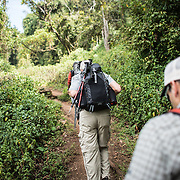 Hikers walking through the forest in the lower elevations of Mount Kilimanjaro at Lemosho Glades Trailhead on Day 1 of a hike along the mountain's Lemosho route.