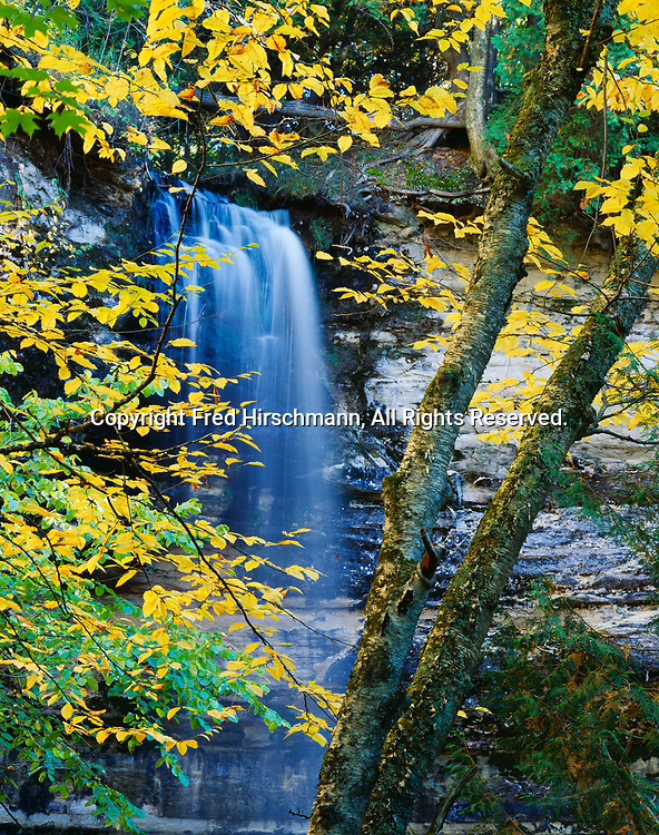 Munising Falls framed by Yellow Birch, Betula alleghaniensis, in autumn, Pictured Rocks National Lakeshore, Upper Peninsula of Michigan.