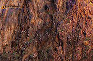 Colorful Zoroaster granite walls above Bright Angel Creek in Grand Canyon National Park, Arizona, USA