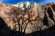 Weeping Rock, Zion Canyon Scenic Drive, Zion NP