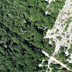 """""""Aberta de Clúsia (Paisagem) fotografado em Guarapari, município do estado do Espírito Santo -  Sudeste do Brasil. Bioma Mata Atlântica. Registro feito em 2018.<br /> ⠀<br /> ⠀<br /> <br /> <br /> <br /> <br /> ENGLISH: Open of Clusia photographed in Guarapari, in Espírito Santo - Southeast of Brazil. Atlantic Forest Biome. Picture made in 2018."""""""