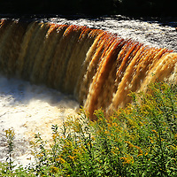 """Flowers of Tahquamenon""<br /> <br /> The last wildflowers of Indian Summer at Tahquamenon Falls.<br /> <br /> Waterfalls by Rachel Cohen"