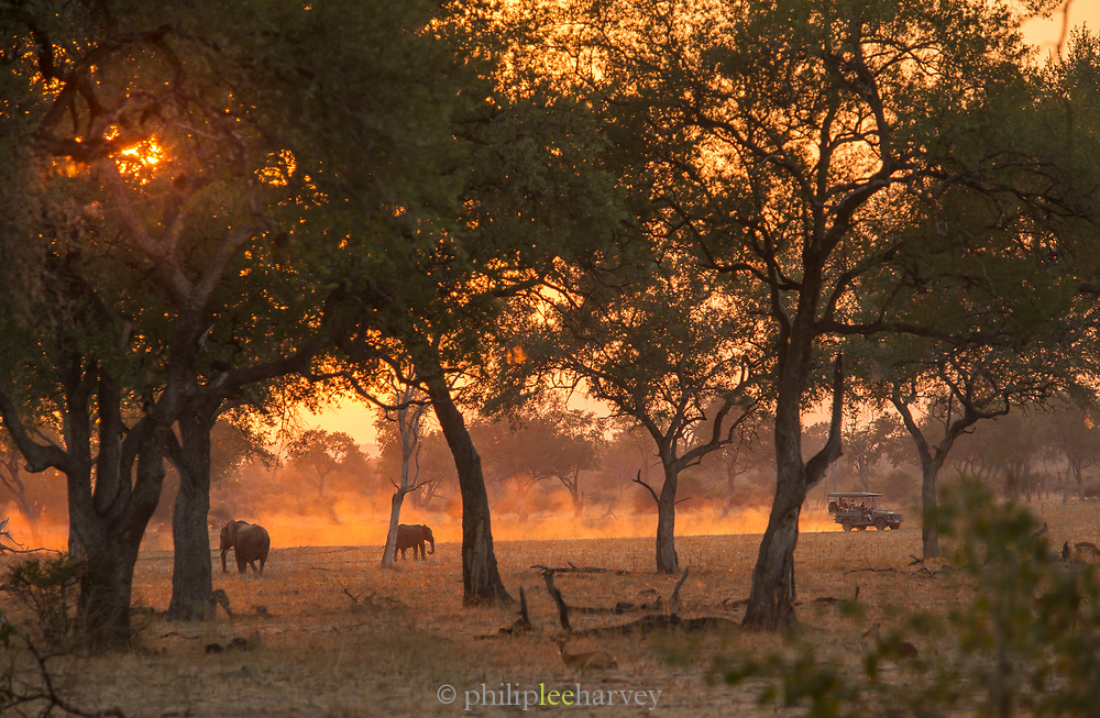 African elephants and safari 4x4 at sunset in South Luangwa National Park, Zambia
