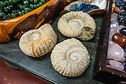 Nautilus fossils. Cassiar Mountain Jade Store, Jade City, British Columbia, Canada. The scenic Stewart–Cassiar Highway (Highway 37, aka Dease Lake Highway or Stikine Highway) is the northwesternmost highway in BC.