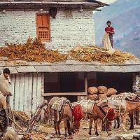 A trading caravan stops at a house in the Kali Gandaki Valley, Nepal.