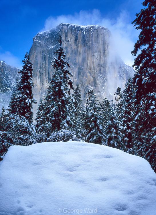 El Capitan on Morning after Storm, Yosemite National Park, California