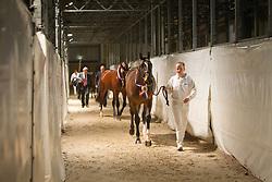 006 - Elion V<br /> KWPN Hengstenkeuring - 's Hertogenbosch 2012<br /> © Dirk Caremans