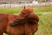 Horse in field in New Mexico
