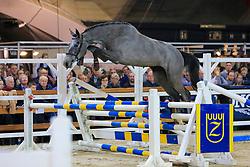 032, Rosy vd Bisschop<br /> Jumping Mechelen 2019<br /> © Hippo Foto - Martin Tandt<br />  27/12/2019
