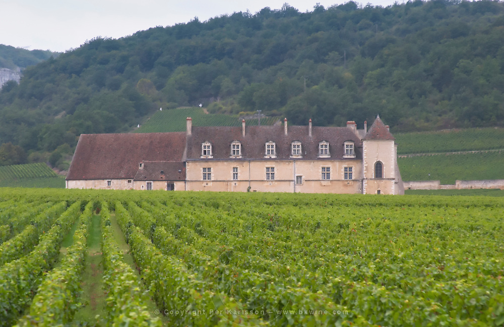 Vineyard. Chateau du Clos de Vougeot. Cote de Nuits, d'Or, Burgundy, France