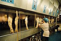 14 APR 2001, HOHEN LUCKOW/GERMANY:<br /> Kuehe werden mit einer modernen Melkanlage gemolken, auf Gut Hohen Luckow, einem der groessten Milchwirtschaftsbetriebe Deutschlands<br /> IMAGE: 20010414-01/01-24<br /> KEYWORDS: Kuh, Rind, Landwirtschaft, agriculture, Milch, melken, Technik, Kühe,Arbeiter, worker