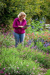 Taking notes in a border of salvias on an ipad