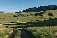 Everything was very green in mid-May in the foothills of the Bighorn Mountains.