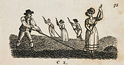 Haymaking. Early 19th century engraving.