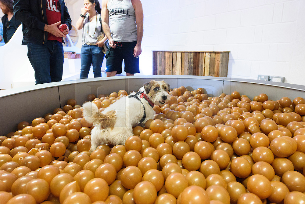 © Licensed to London News Pictures. 20/08/2016. Dog enjoying artwork titled 'Dinnertime Dreams' by DOMINIC WILCOX.  The world's first art exhibition for dogs was created by artist DOMINC WILCOX is part of the MORE THAN's #PlayMore campaign, encouraging owners to spend more time playing with their pets.  London, UK. Photo credit: Ray Tang/LNP