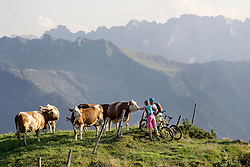 Young couple of mountainbikers stroking cow in alpine landscape, Zillertal, Tyrol, Austria