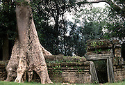 Ta Phrom .temple known as the Jungle Temple is a ruined Kymer temple in Angkor Archeological Park, Siem Riep, Cambodia. August 2002