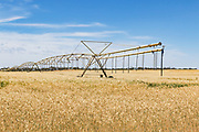 Mobile lateral move irrigation boom system in field of golden wheat before harvest near Woolpunda, South Australia, Australia. <br />