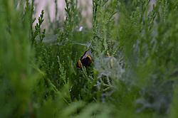 July 3, 2017 - Ankara, Turkey - A dead bee is seen in a spider's web in Ankara, Turkey on July 03, 2017. (Credit Image: © Altan Gocher/NurPhoto via ZUMA Press)