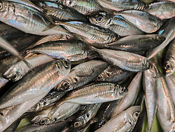 European pilchard for sale at fish market, Getxo, Algorta, Basque Country, Biscay, Spain, Europe