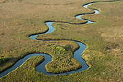 Papyrus swamps & channel. On leaving the restraining faults of the Panhandle the Okavango's waters spill and spread over the Kalahari sands, forming a vast delta of lagoons, channels and reedbeds. This channel is permanant and not seasonal flooding. The deeper water is in the channels which are kept open by hippopotamus. The reedbeds themselves support few creatures.<br /> Okavango Delta, BOTSWANA. Southern Africa