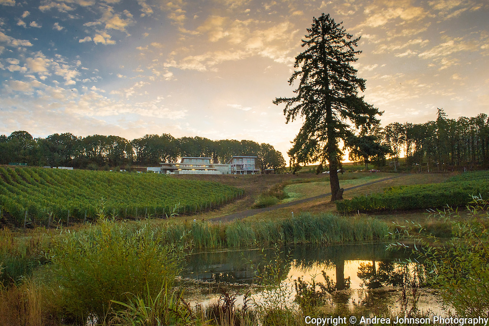 Sunrise over Alexana Estate Vineyards, Dundee Hills AVA, Willamette Valley, Oregon
