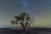 The stars twinkle behind a lone tree at Massacre Hill in the Fetterman Monument. A bloody battle was fought here between the plains Indians and the US Army in 1866.