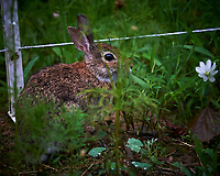 Wet Rabbit nibbling on plants. Image taken with a Nikon Df camera and 300 mm f/4 lens