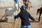 Cappadocia, Turkey.  November 8th 2017 <br /> Ekram attempts to rope wild Anatolian horses as part of the process of breaking them before putting them to work on the ranch.
