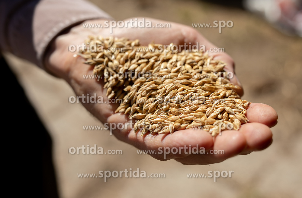 Rye in a man's hand, on April 24, 2021 in Crnuce, Ljubljana, Slovenia. Photo by Vid Ponikvar / Sportida