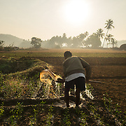 Returning from fishing, a farmer waters his field at sunrise.