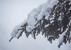 THEMENBILD - frischer Neuschnee auf einem Ast einer Fichte, aufgenommen am 13. November 2019, Piesendorf, Österreich // fresh snow on a branch of a spruce tree on 2019/11/13, Piesendorf, Austria. EXPA Pictures © 2019, PhotoCredit: EXPA/ Stefanie Oberhauser